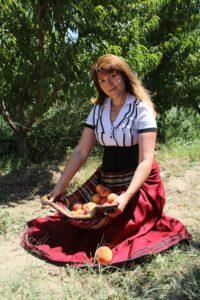 die Ernte von Pfirsichen